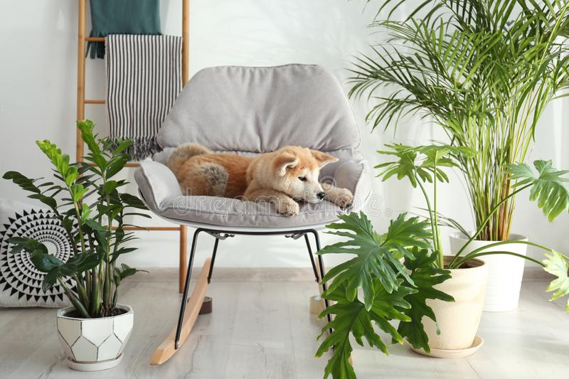Sensational Dog Rocking Chair Stock Photos Download 110 Royalty Free Squirreltailoven Fun Painted Chair Ideas Images Squirreltailovenorg