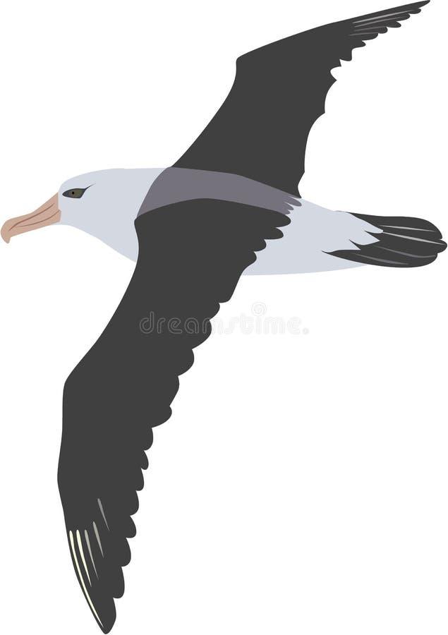 Cute albatross vector. Cute flying albatross cartoon vector vector illustration