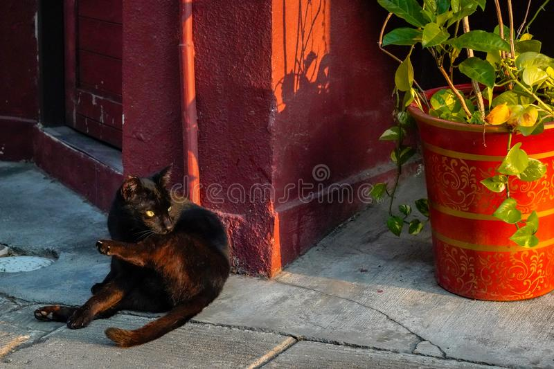 Cute alley cat relaxing at a doorway on the street. Alley cat relaxing at a doorway on the street royalty free stock images