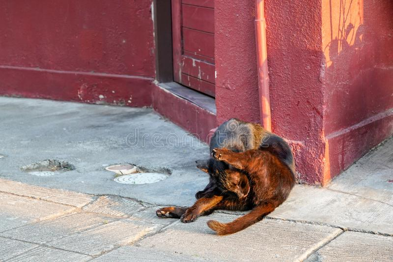 Cute alley cat relaxing at a doorway on the street. Alley cat relaxing at a doorway on the street royalty free stock photos
