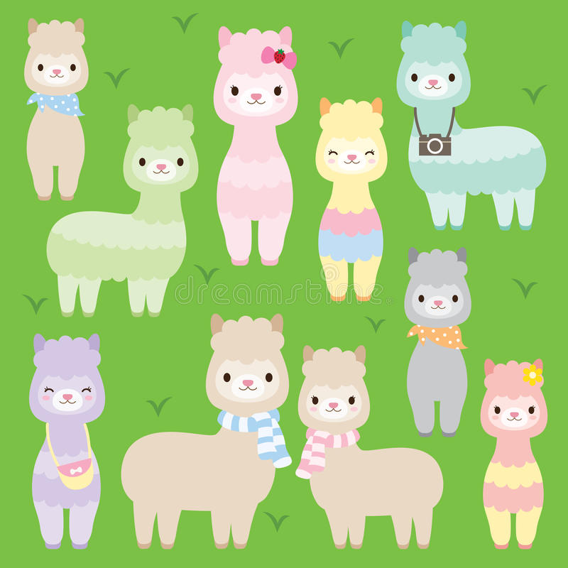 Cute Alpacas Llamas vector illustration