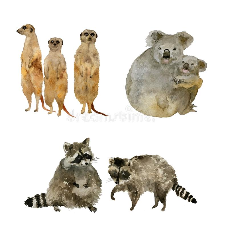 Funny animals: raccoons, koalas and meercats . Isolated on white watercolor. Cute animal: raccoon koalas and meercats . Watercolor vector illustration