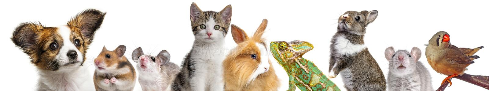 Cute animals royalty free stock photography