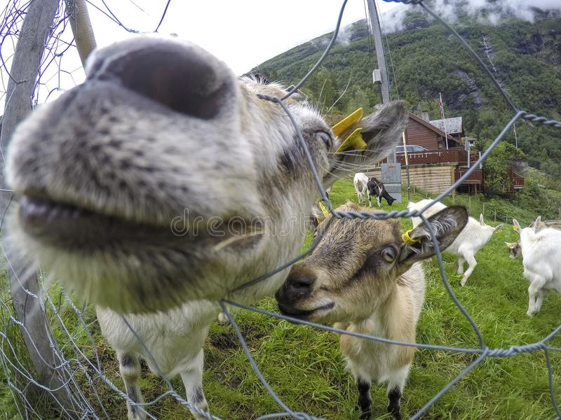 Cute animals posing for the camera beeing curious stock photo