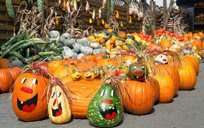 Cute arrangement of lots of pumpkins royalty free stock photo