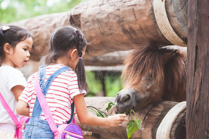 Cute asian child girl feeding a horse in the farm. With happiness royalty free stock photos