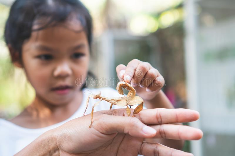 Cute asian child girl looking and touching leaf grasshopper that stick on parent hand with curious and fun. In the zoo royalty free stock photos