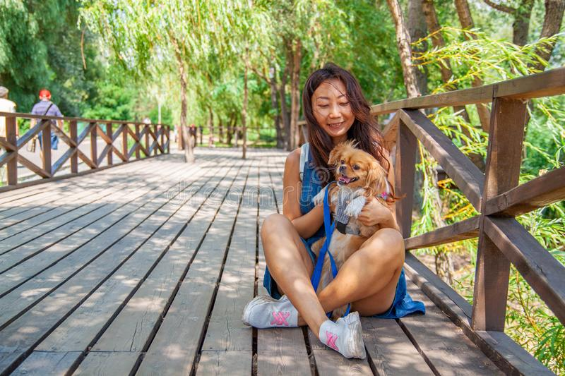 Cute asian girl with little dog walking in park. Woman sitting on green grass with dog - outdoor in nature portrait. Pet, domestic royalty free stock photography