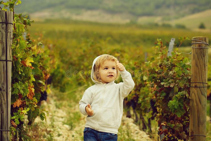 Cute baby boy child. With curly blond curly hair in gray hoody and jeans show cool on vineyards background stock photos