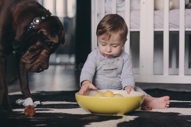 Cute baby boy eating cookies and playing at home. Candid captute in real life interior royalty free stock image