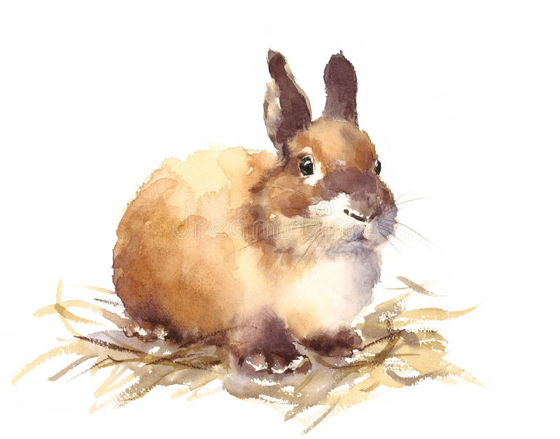 Cute Baby Bunny Watercolor Animals Illustration Hand Drawn royalty free illustration