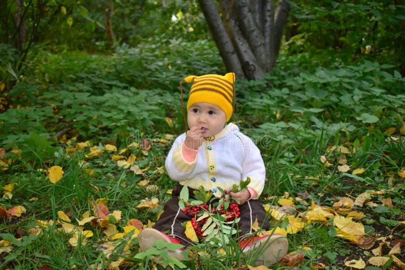 Cute baby eating Rowan berries stock photos