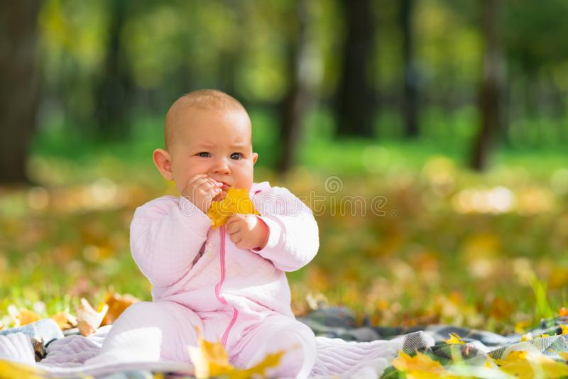 Cute baby girl chewing on an autumn leaf. stock photo
