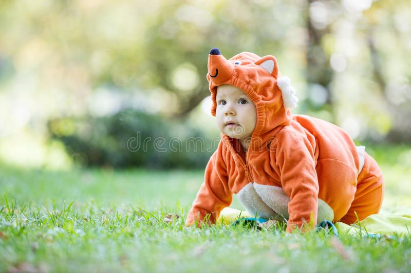 Cute baby girl dressed in fox costume crawling on lawn in park stock photos