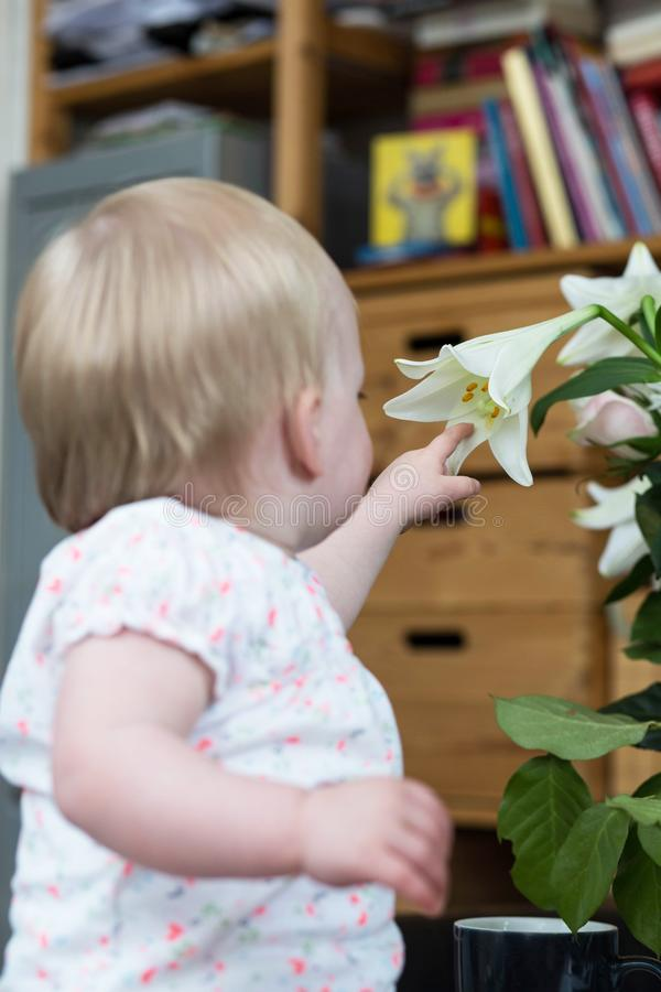 Cute baby girl inspecting a white flower royalty free stock photos