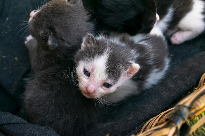 Cute baby kitten in a basket stock images