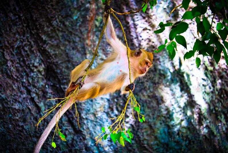 The cute baby monkey. On the tree is looking royalty free stock photo