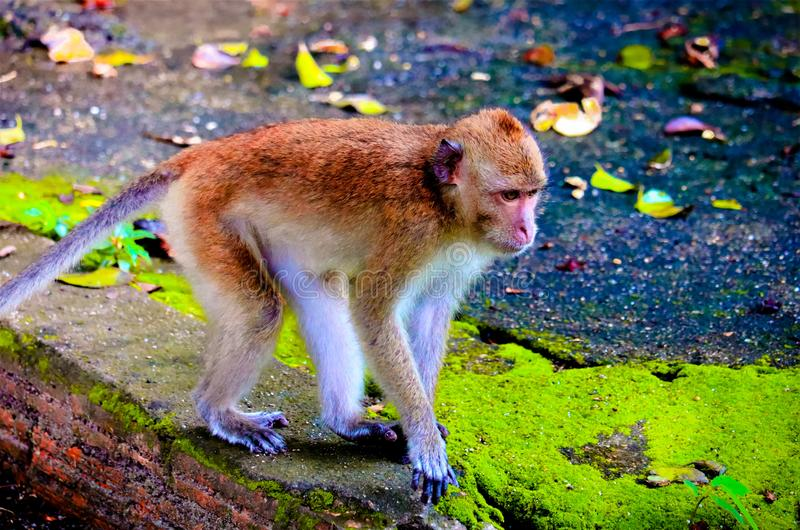 The cute baby monkey. On the tree is looking royalty free stock images