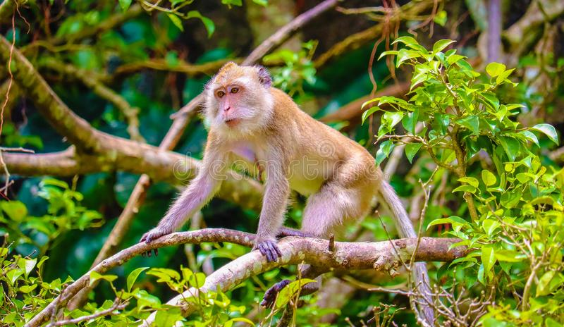 The cute baby monkey. On the tree is looking stock photos