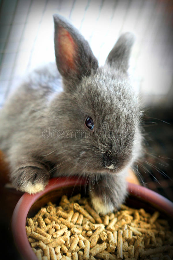 Cute baby rabbit. Eating food stock images