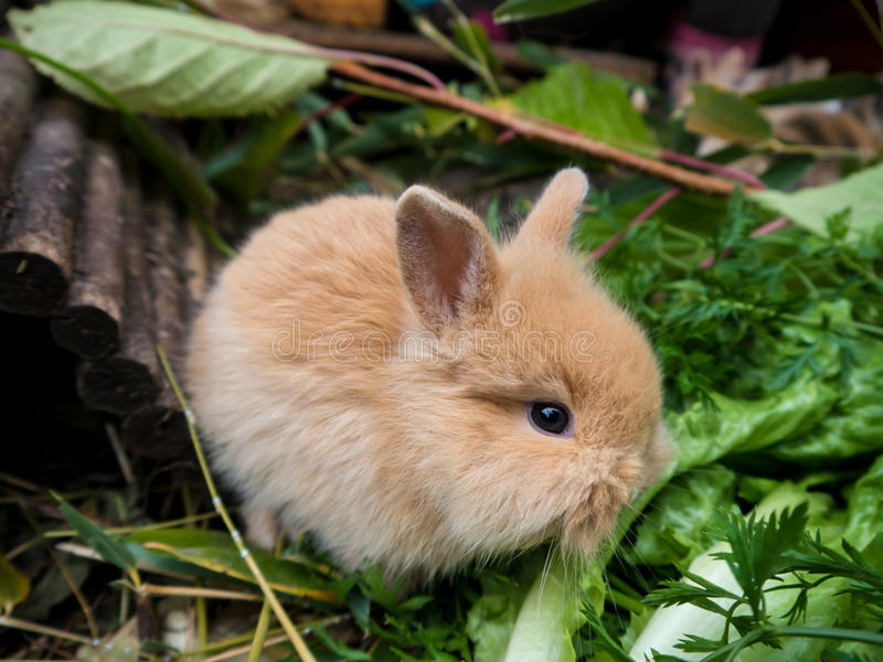 Cute baby rabbit. Cute rabbit eating vegetables close-up royalty free stock images
