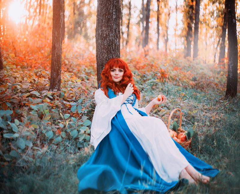 Cute Bavarian beauty under tree in morning light forest with basket of apples. Holds red fruits in her hands, pretty girl with orange hair and snub nose and royalty free stock photos