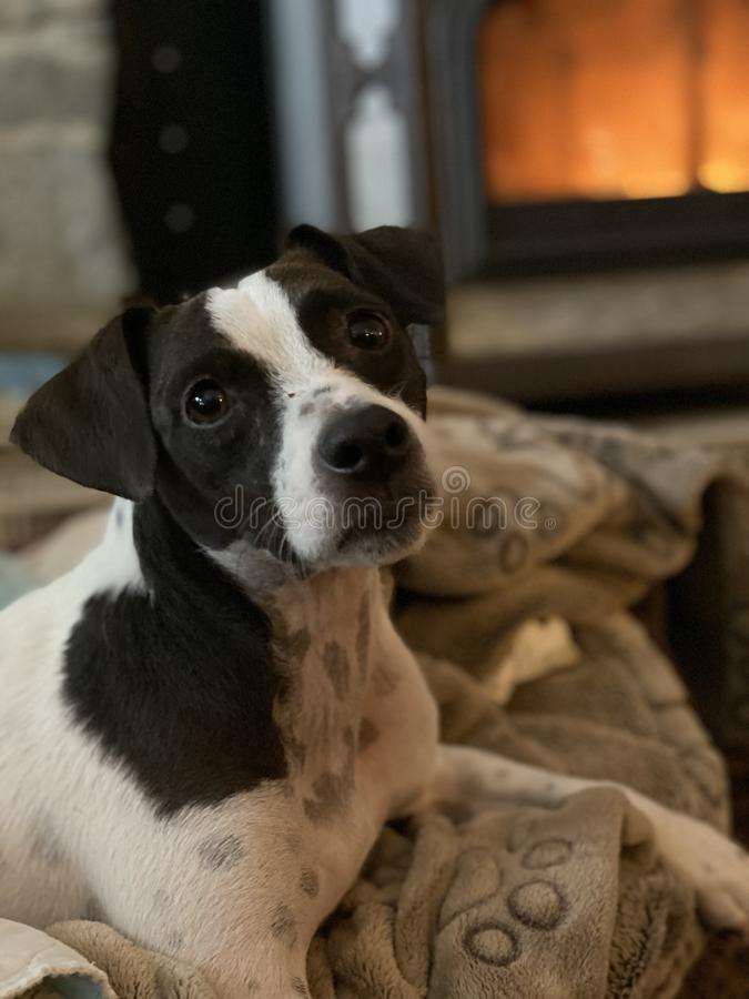 Cute puppy laying by wood stove royalty free stock images