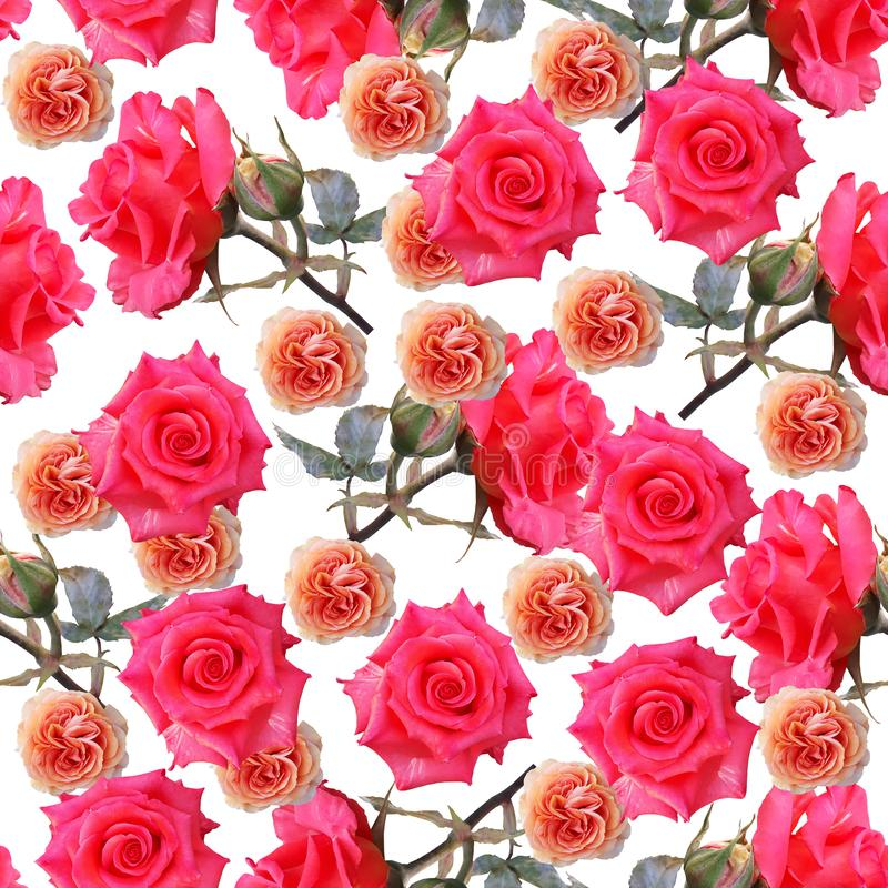 Cute beautiful colorful roses. Seamless floral photo background. Digital mixed media artwork for wrapping paper, wallpaper design royalty free illustration