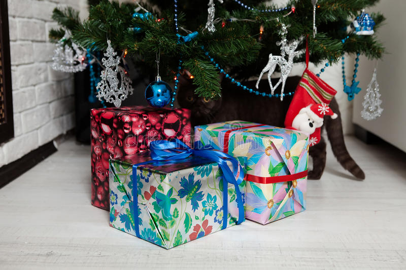Cute Bengal Cat playing under the Christmas tree royalty free stock photo