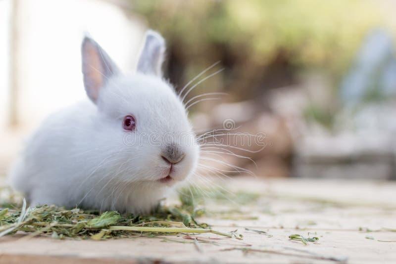 Cute biały królik w pobliżu z kopią fotografia royalty free