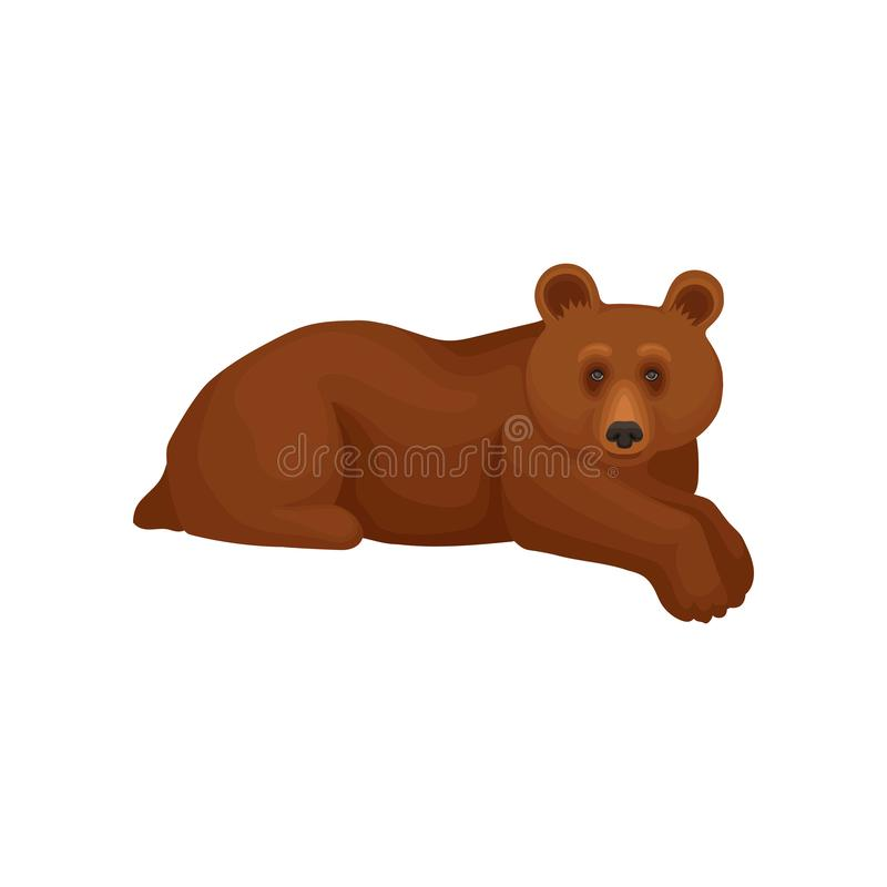 Cute big bear lying isolated on white background. Cartoon character of wild forest animal with brown fur. Flat vector vector illustration