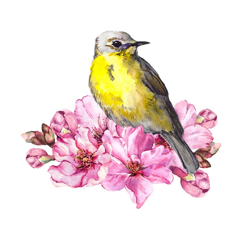 Cute bird in cherry blossom, sakura flowers in spring time. Watercolor twig vector illustration