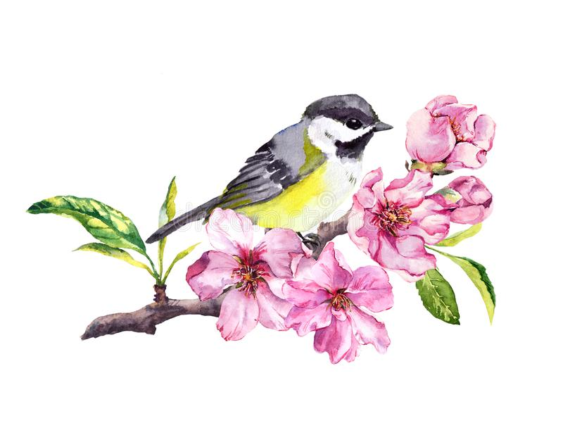Cute bird in cherry blossom, sakura flowers in spring time. Watercolor twig stock illustration