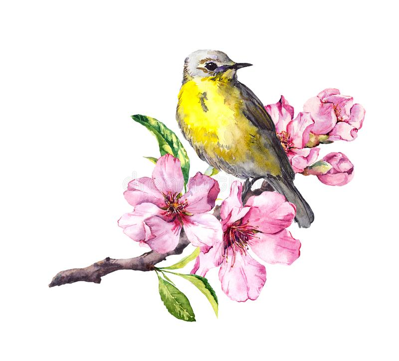 Cute bird on flowering cherry tree branch with spring blossom. Watercolor for spring time design royalty free illustration