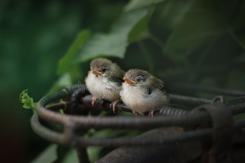 Cute birds. Cute love birds stock photo