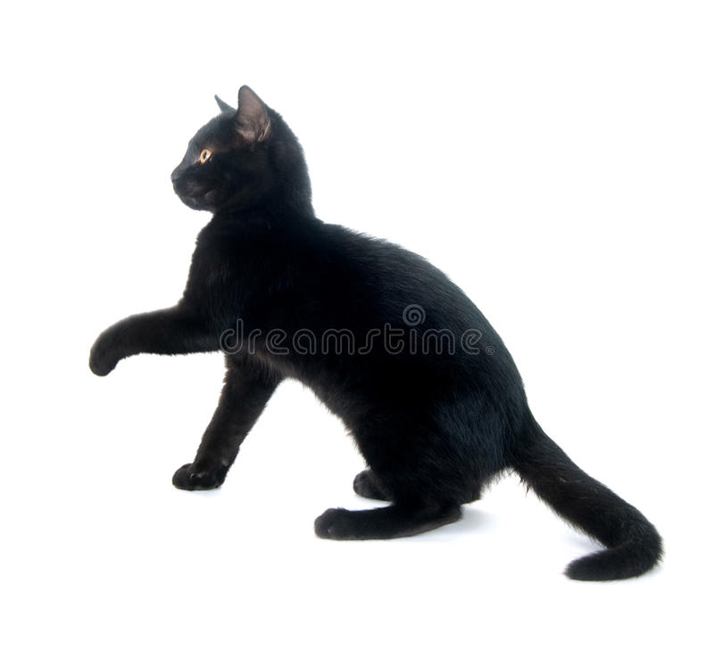 Cute black cat. Playing and jumping on white background royalty free stock image