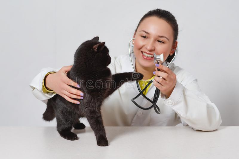 Cute black cat at the doctor`s veterinarian. on white background. On white background stock photos
