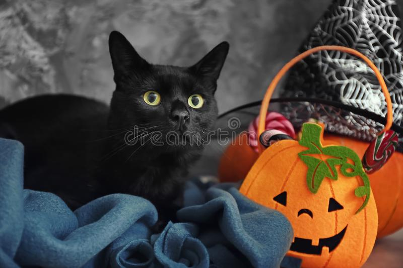 Cute black cat and Halloween decor near grey wall royalty free stock photography