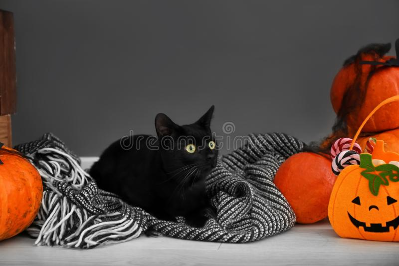 Cute black cat and Halloween decor near grey wall stock photography
