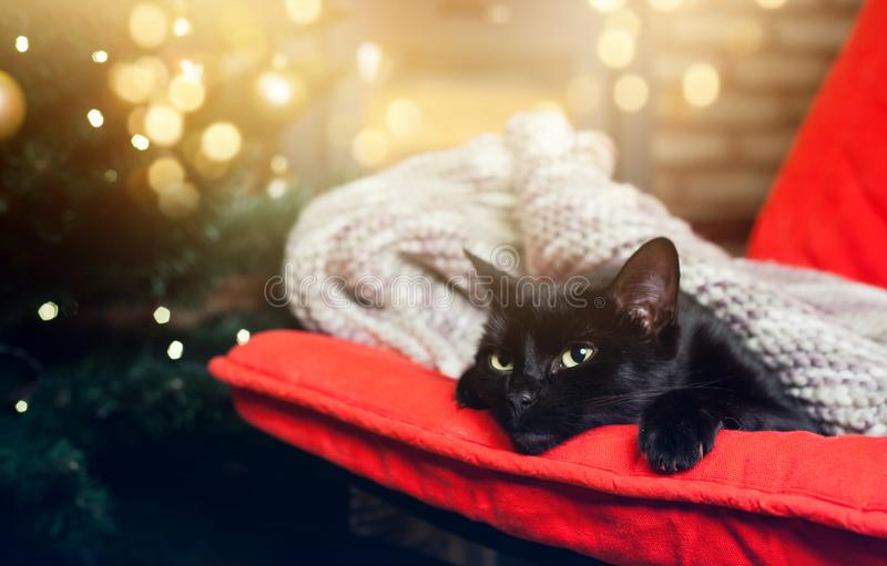 cute black cat peacfully sleeping on red chair, christmas tree a royalty free stock photo