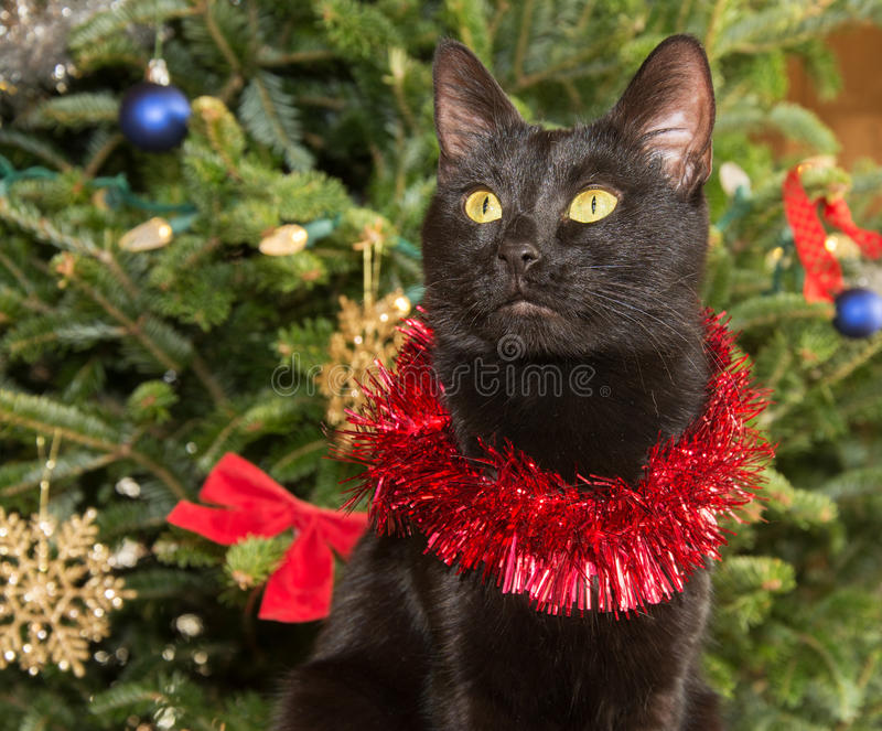 Cute black cat wearing tinsel against green Christmas tree. Background stock photos