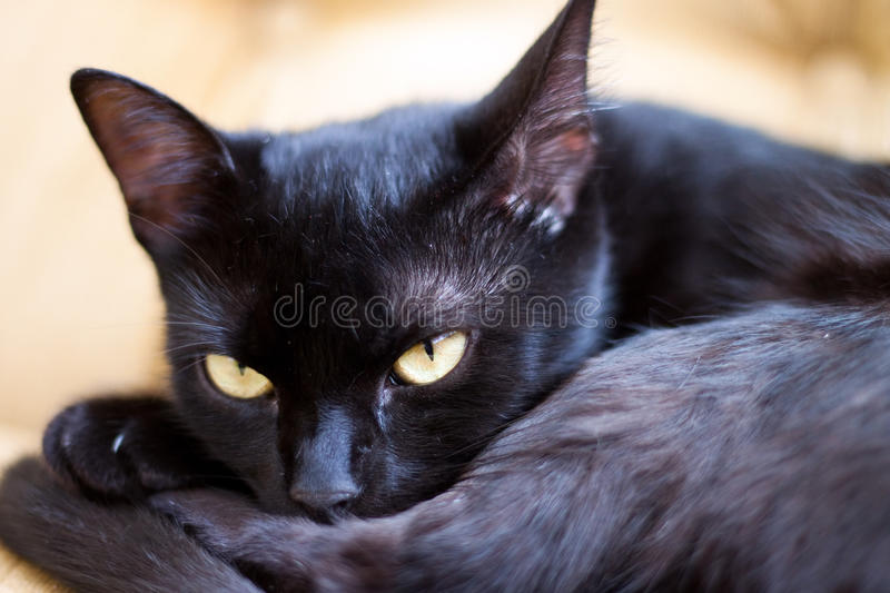 Cute black cat with yellow eyes. Focus on eye royalty free stock photo