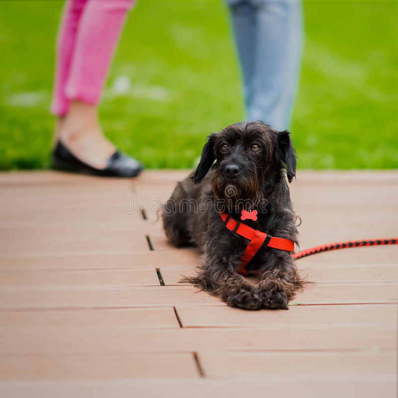 Cute black crossbreed dog from shelter, special place where future owners can choose him and he will have house. Look of stock photo