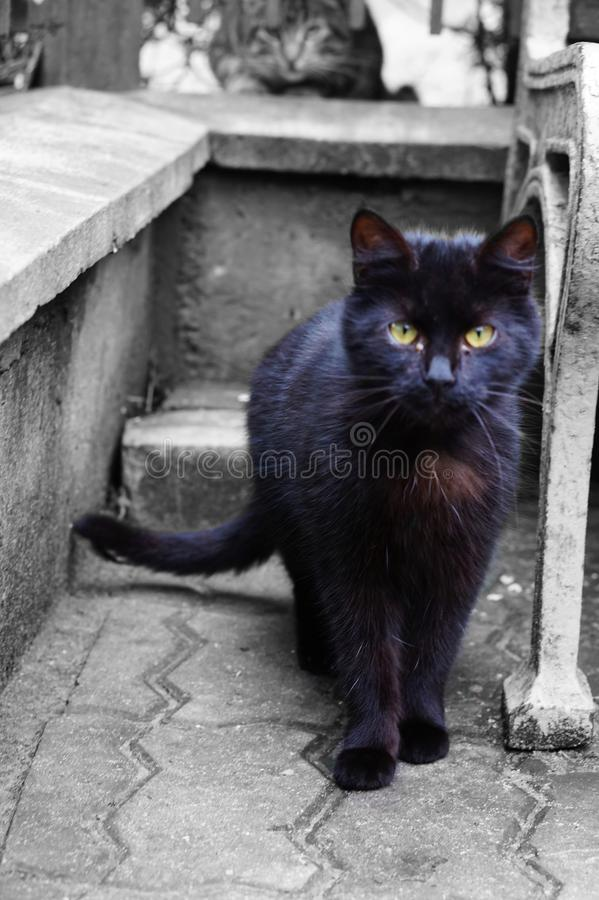 Download Cute black kitten alert stock photo. Image of alert, cute - 86688606