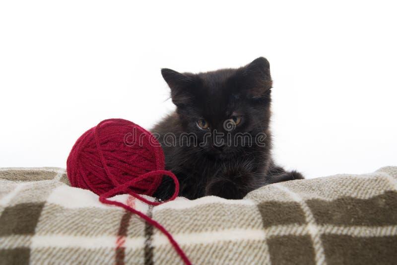 Cute black kitten on blanket royalty free stock photography