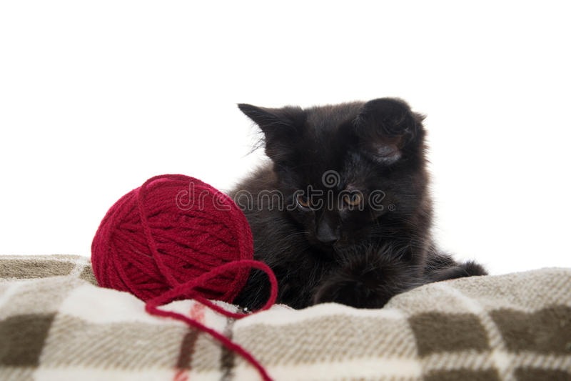 Cute black kitten on blanket royalty free stock photo