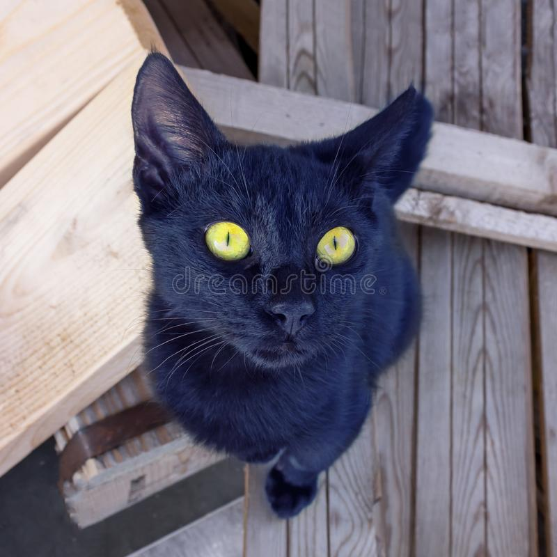 Cute black kitten with bright yellow eyes looks up. Concept is taking care of homeless animals. Selective focus stock photo