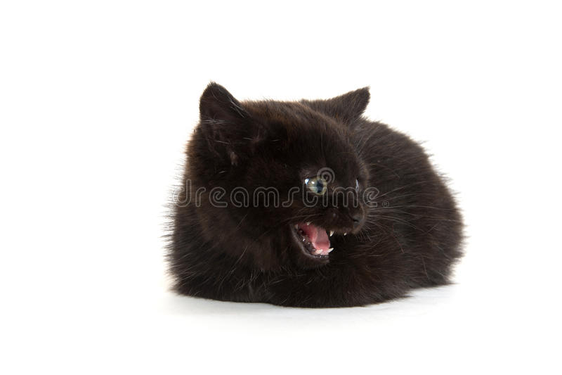 Cute black kitten crying royalty free stock photos