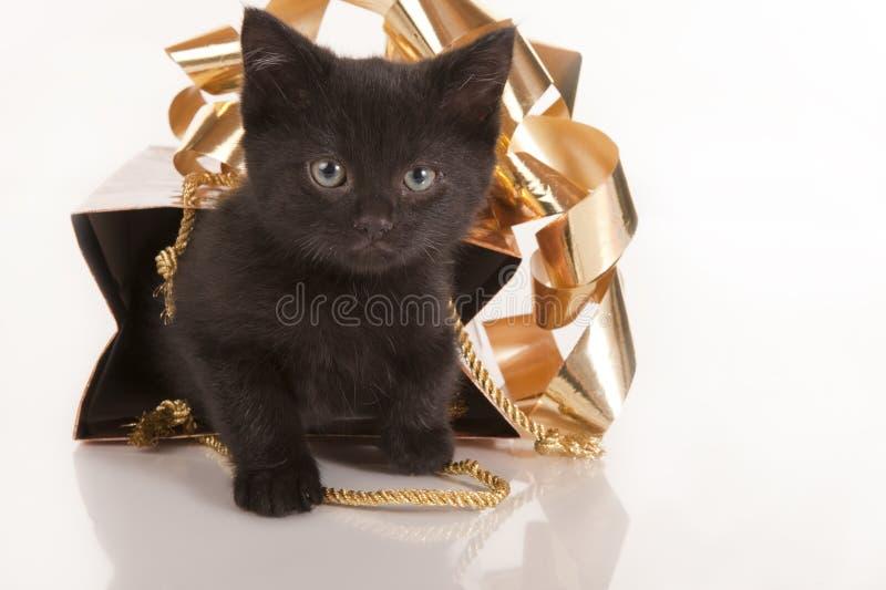 Cute black kitten in gold gift bag stock photos
