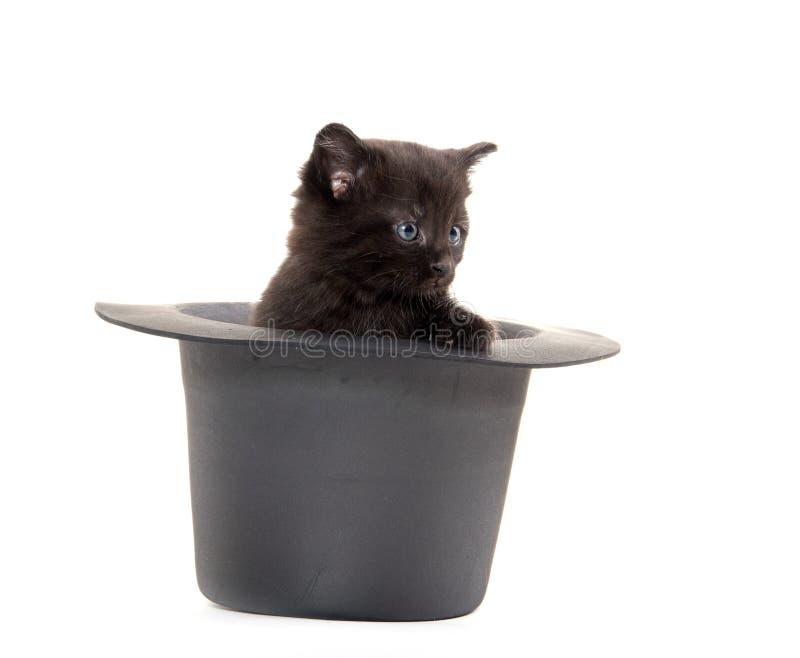 Cute black kitten in hat stock image